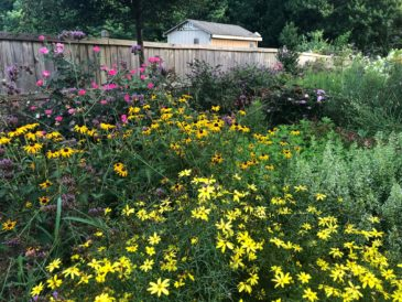 Buford & Gwinnett County, GA Landscaping Services Company