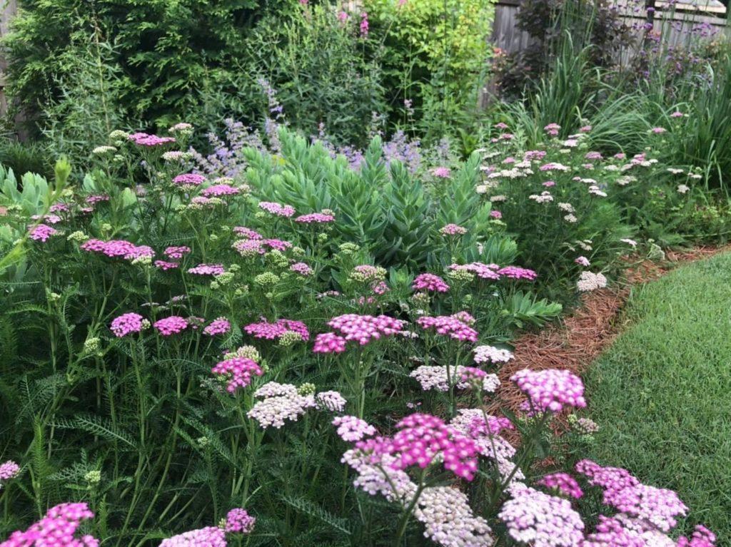 Flowery Branch, GA Landscape Maintenance Services