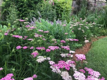 Flowery Branch, GA Landscape Maintenance Services
